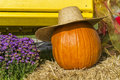 Pumpkin and hat on hay with flowers Royalty Free Stock Photo
