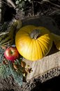 Pumpkin Heart with Healthy Foods Fall harvest Royalty Free Stock Photo