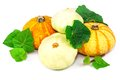 Pumpkin and marrow with leaves macro view of green isolated on white background Royalty Free Stock Photography