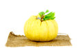 Pumpkin one of felicitous vegetable isolated on white Royalty Free Stock Photo