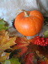 Pumpkin orange on colorful autumn leaves Royalty Free Stock Photo