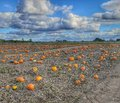 Pumpkin patch fall warm beautiful Royalty Free Stock Photo