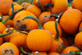 Pumpkin Patch at a Farm Royalty Free Stock Photo