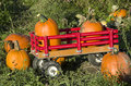 Pumpkin patch farm nice pumpkins were picked and put on a wagon at a local near seattle Stock Photography