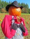 Pumpkin patch scarecrow a headed in pink shirt gray hat and striped overalls standing among the pumpkins with people in the Royalty Free Stock Photo