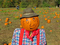 Pumpkin patch scarecrow a headed standing among the pumpkins with families in the background searching for that special Royalty Free Stock Photo