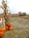 Pumpkin Patch Scarecrows with Wheelbarrow Royalty Free Stock Photo