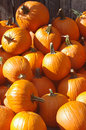 Pumpkin pile on the farm a of orange pumpkins Royalty Free Stock Photos