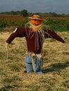 Pumpkin Scarecrow Royalty Free Stock Photo