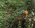Orange pumpkin sitting on a stump in the forest with ferns and ivy surrounding it