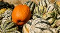 A pumpkin in the squash bunch of Royalty Free Stock Photos