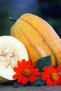 Pumpkin squash for food Royalty Free Stock Images