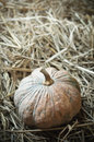 Pumpkin on straw closeup vegetable Royalty Free Stock Photo