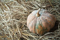 Pumpkin on straw closeup vegetable Royalty Free Stock Images
