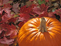 Pumpkin surrounded by colorful leaves Royalty Free Stock Image