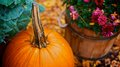 Pumpkin time a ripe next to a basket of flowers in autumn Royalty Free Stock Image