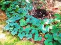 stock image of  Pumpkin tree on the ground