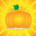 Pumpkin vector Stock Images