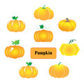Pumpkin vector on white background Stock Images
