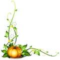 A pumpkin vine decor Royalty Free Stock Photo