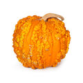 Pumpkin with warts halloween covered in isolated on white Royalty Free Stock Photos
