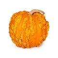 Pumpkin With Warts