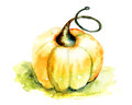 Pumpkin watercolor illustration of big Royalty Free Stock Images