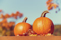 Pumpkins against autumn trees and blue sky Royalty Free Stock Photo