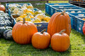 Pumpkins assortment for sale on grass field Stock Photography
