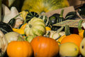Pumpkins assortment for sale on grass field Royalty Free Stock Image