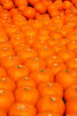 Pumpkins baclground group of pumpkin at the farm patter background Stock Photography