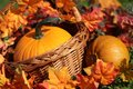 Pumpkins in basket and colorful autumn leaves Stock Image