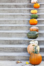 Pumpkins on the concrete stairs with space for text Stock Photo