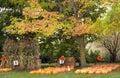 Pumpkins and Corn Stalks Royalty Free Stock Photo