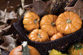 Pumpkins and Corn for Thanksgiving Decor Royalty Free Stock Photo