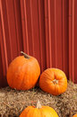 Pumpkins at a country Setting Stock Photos