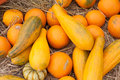 Pumpkins cucurbita moschata picked set straw to cure prior to being placed winter storage Stock Image