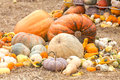 Pumpkins with different colours in the field Stock Photos