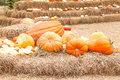 Pumpkins different colours field Royalty Free Stock Photos