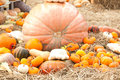 Pumpkins with different colours in the field Royalty Free Stock Photos