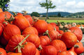 Pumpkins of different sizes placed next to each other Royalty Free Stock Images