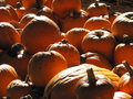 Pumpkins beside each other for sale during a sunny bright day Royalty Free Stock Photo