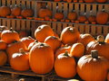 Pumpkins beside each other for sale during a sunny bright day Royalty Free Stock Photos