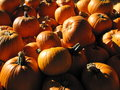 Pumpkins beside each other for sale during a sunny bright day Stock Images