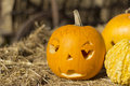 Pumpkins on fall festivity blurred background Stock Photo