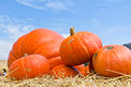 Pumpkins in farm Stock Photography