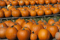 Pumpkins Farm, Food, Halloween Pumpkin Fall Autumn Royalty Free Stock Photo