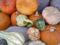 Pumpkins and Gords Stock Images