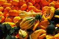 Pumpkins and gourds Stock Images