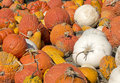 Pumpkins and gourds at the farm Royalty Free Stock Photography